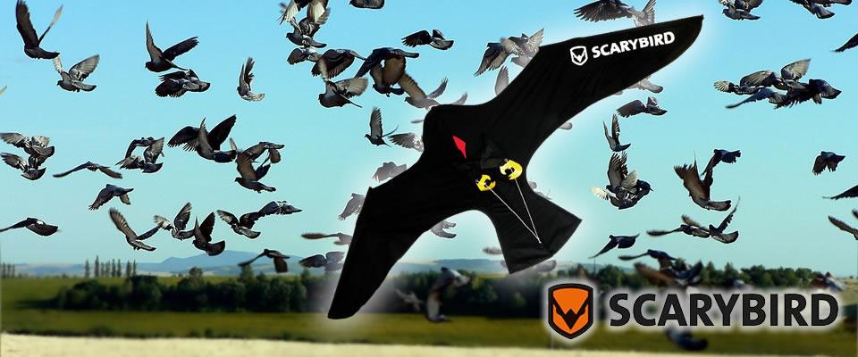 Allontanamento piccioni con Scarybird
